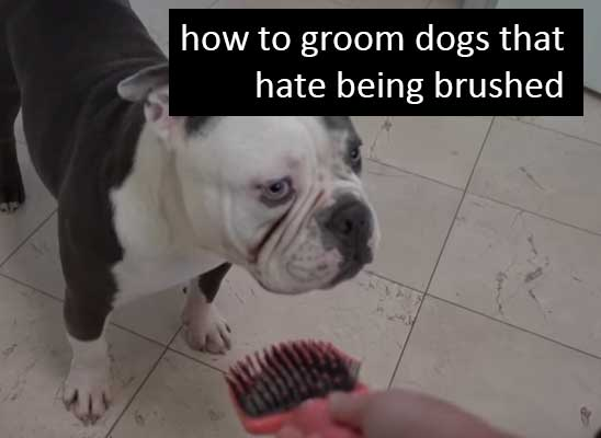 Dog Brushing Tips