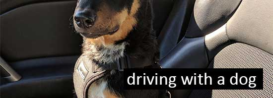 Driving Safely with Dogs