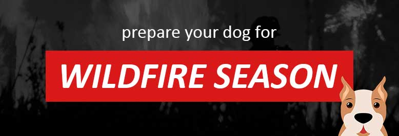Preparing Your Dog for Wildfires