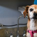 3 Simple Tips on Comforting a Dog with Pancreatitis