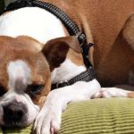 3 Reasons Why Your Dog Throws Up Undigested Food Hours After Eating