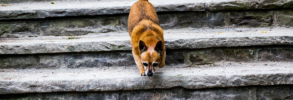 Dog Scared Stairs